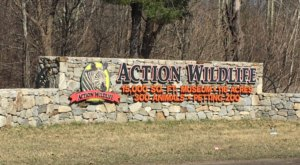 See Zebras And Water Buffalo Up Close At Action Wildlife, A Drive-Thru Adventure In Connecticut