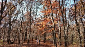 Seidman Park In Michigan Is The Perfect Place For A Peaceful Fall Walk