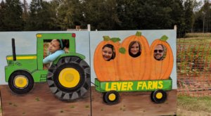 Chow Down And Stock Up On Pumpkin Fritters, Pumpkin Butter, And Pumpkins This Fall At Lever Farms In South Carolina