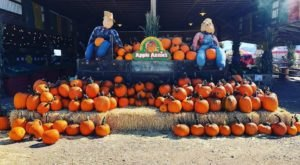 Fall Into The Season With A Weekend Trip To Apple Annie's Orchard In Arizona