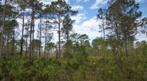 Take An Easy Loop Trail To Enter Another World At Little Big Econ State Forest In Florida