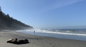 Washington's Kalaloch 4th Beach Trail Is A Unique Place To Visit