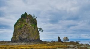 The Ozette Triangle Trail Shows Off The Washington Coast At Its Finest