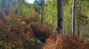 Bask In The Beauty Of Autumn On The Lake Blanche Trail In Utah This Season