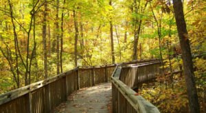 See Some Of The Best And Most Colorful Foliage In Alabama While Exploring These 7 Trails This Fall