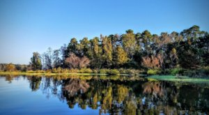 Texas Has Four Lush National Forests And You'll Want To Explore Them All