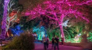 Drive Or Walk Through Millions Of Holiday Lights At ZooLights In Arizona