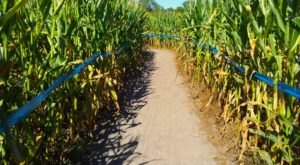 "This ""Living Puzzle"" Corn Maze Is Returning To Florida This Autumn And It's Absolutely Huge"