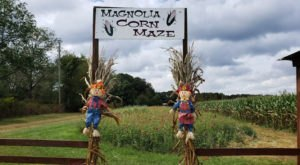 With Corn Mazes, Paintball, A Raceway, And More, Magnolia Farms Is The Perfect Fall Destination In Alabama
