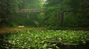 Ravine Gardens State Park In Florida Is So Hidden Most Locals Don't Even Know About It
