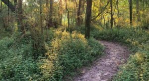 Enjoy Pure Tranquility Hiking The Comite Park Trail In Louisiana