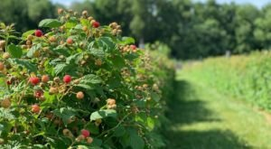 A Picturesque Farm And Winery, Holmberg Orchards Is A Must-Visit Destination In Connecticut
