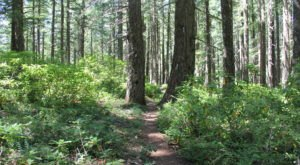 Hanging Rock Trail Is An Easy Hike In Oregon That Takes You To An Unforgettable View