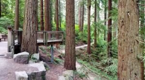 Admission-Free, Hoyt Arboretum In Oregon Is The Perfect Day Trip Destination