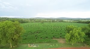 Navigate Virginia's Largest Corn Maze At Liberty Mills Farm For A Festive Fall Adventure