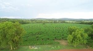 Navigate Virginia's Largest Corn Maze At Liberty Mills Farm For A Festive Fall Adventure