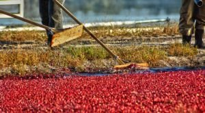 New Jersey's Brand New Cranberry Trail Is A Perfect Fall Drive