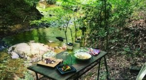 Dine Alone In The Woods At The One-Seat, Zero Contact Restaurant, Ett In Georgia