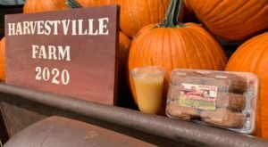 Treat Your Tastebuds To A Fall Delicacy When You Feast On Apple Cider Donuts From Harvestville Farm In Iowa
