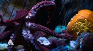 Utah's Loveland Aquarium Is Haunted This Halloween, And It's Full Of Tricks And Treats