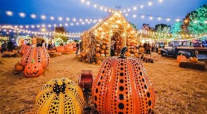 Go Pumpkin Picking At The Two-Acre Jack's Pumpkin Pop Up in Illinois
