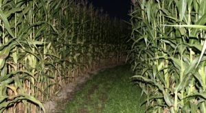 The Haunted New Salem Corn Maze In Michigan Is Frightfully Fun