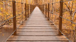Walk Across This Swinging Bridge For A Gorgeous View Of Maryland's Fall Colors