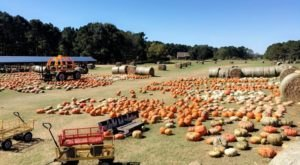 Don't Let The Fall Season Pass Without A Visit To Mitchell Farms, Mississippi's Best Pumpkin Patch
