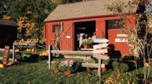 Pick Pumpkins Off The Vine At Warrup's Farm, A Lovely Fall Destination In Connecticut