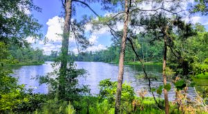 Get Lost In A Sea Of Emerald Green At The Kincaid Recreation Area In Louisiana