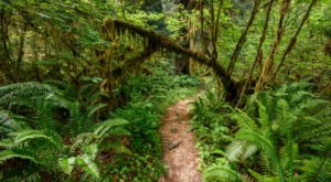 The Hoh Rainforest Is A Fascinating Spot in Washington That's Straight Out Of A Fairy Tale