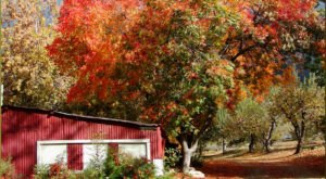 The Fall Leaves Are Popping With Color In Southern California And You Don't Want To Miss It
