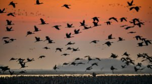 Start Planning Now To Observe The Thousands Of Sandhill Cranes That Arrive In Idaho Every Fall