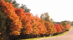 2020's Fall Colors Could Be The Best Virginia Has Seen In Years