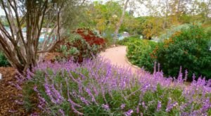 The Tiny Botanical Garden In Southern California, Manhattan Beach Botanical Garden, Is A Little-Known Local Gem
