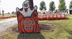 Treat Yourself To Some Of The Season's Best Pumpkin Donuts At Didier Farms In Illinois