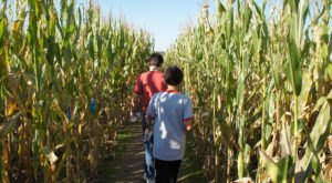 The Maybury Farm Corn Maze Near Detroit Is A Classic Fall Tradition