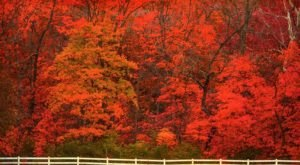 According To The 2020 Fall Foliage Prediction Map, Here's When You Can Expect The Colors To Peak In Your Part Of Missouri