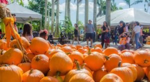 The Pinto's Farm Pumpkin Patch In Florida Is A Classic Fall Tradition