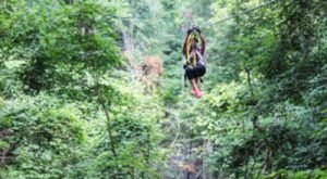 You'll Feel Like A Kid Again Riding This Epic Zip Line At Shawnee Bluffs Canopy Tour In Illinois