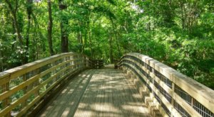 The 150 Acres At The Acadiana Park Nature Station Will Bring Out The Explorer In You