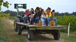 Ride Through A Vineyard While Sipping On Wine During This Perfect Fall Hayride In Maryland