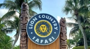 See African Lions And Giraffes Up Close At Lion Country Safari, A Drive-Thru Adventure In Florida