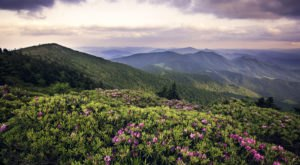 This Day Trip To Roan Mountain State Park Is One Of The Best You Can Take In Tennessee