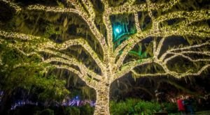 Brookgreen Gardens' Beloved Nights Of A Thousand Candles Will Be Returning To South Carolina