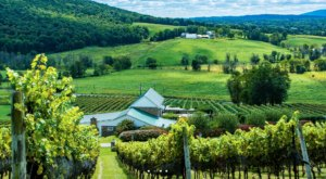 Enjoy A Seasonal Drink At Hillsborough Vineyards & Brewery In Loudoun County, Virginia