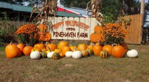 Have A Perfect Fall Day At Pinehaven Farm, Voted One Of The Best Pumpkin Patches In Minnesota