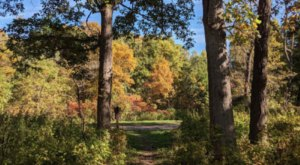 Take An Easy Hike Through Iowa's Yellow River State Forest For A Gorgeous Autumn Scene