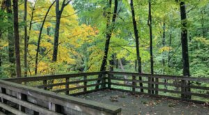 The 1.8-Mile Witch Hazel Trail In Michigan Takes You Through The Enchanting Ringwood Forest