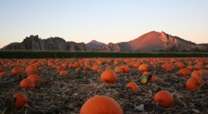 Smith Rock Ranch Is The Perfect Place To Get Your Halloween Pumpkin In Oregon This Season